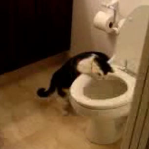 The famous You Tube cat (the one in the toilet)