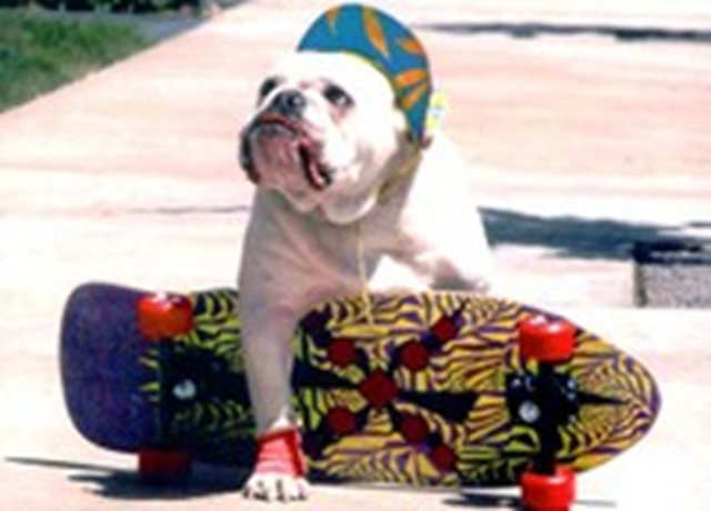 Pictures Of Dogs On Skateboards